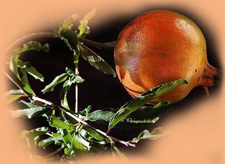 plante anti diabete